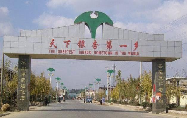 新村银杏产业开发区